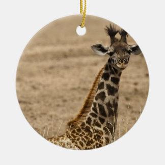 Masai Giraffe, Giraffa camelopardalis, resting Round Ceramic Decoration