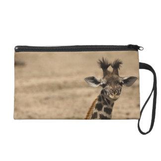Masai Giraffe, Giraffa camelopardalis, resting Wristlet