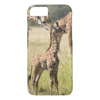 Masai giraffes, Giraffa camelopardalis 2 iPhone 8/7 Case