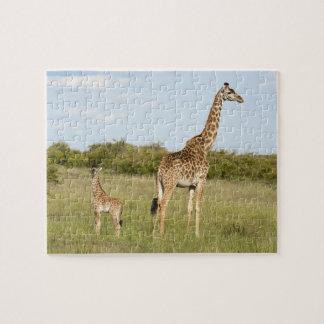 Masai giraffes, Giraffa camelopardalis 3 Jigsaw Puzzle