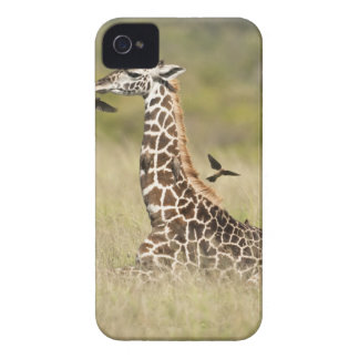 Masai giraffes, Giraffa camelopardalis iPhone 4 Case-Mate Case