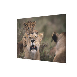 Masai Mara National Reserve 4 Canvas Prints