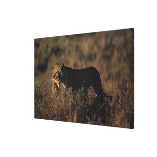 Masai Mara National Reserve 6 Canvas Print