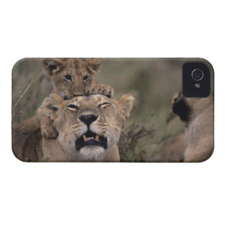 Masai Mara National Reserve 6 iPhone 4 Case-Mate Case