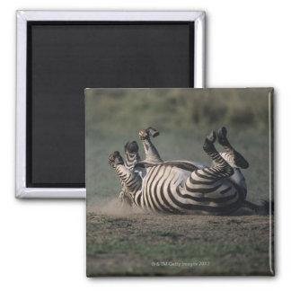 Masai Mara National Reserve, Kenya 2 Square Magnet
