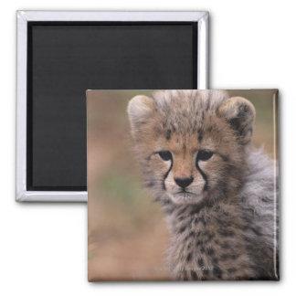 Masai Mara National Reserve Square Magnet