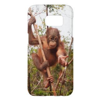 Mason Orangutan in Borneo OFI