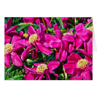 MASS OF FUSCHIA PINK PEONIES WITH GOLD CENTERS CARD