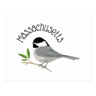 Massachusetts Chickadee Postcard