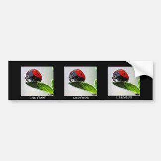 Massachusetts Ladybug Bumper Stickers
