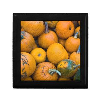 Massachusetts, Salisbury, pumpkins, autumn Gift Box