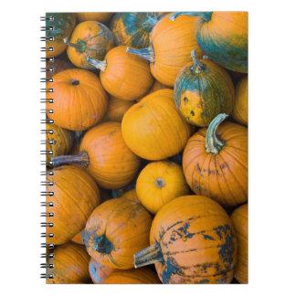 Massachusetts, Salisbury, pumpkins, autumn Note Books