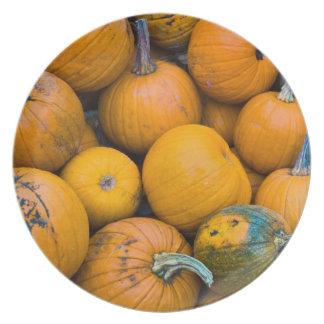 Massachusetts, Salisbury, pumpkins, autumn Plate
