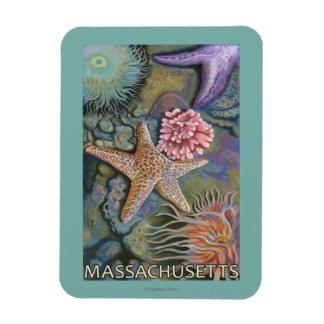 MassachusettsTidepool Scene Rectangular Photo Magnet