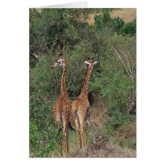 Massai Giraffe 3 Card