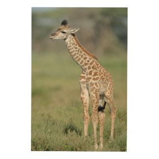 Massai Giraffe Baby Wood Wall Art