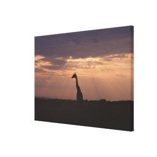 Massai Giraffe Canvas Print