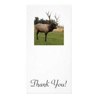 Massive Elk With Big Rack Stands in Lawn Near Mead Photo Greeting Card