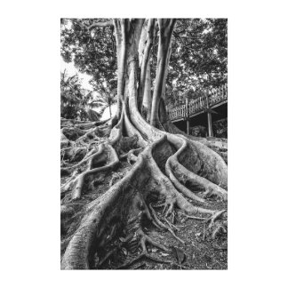 Massive rubber tree roots canvas print