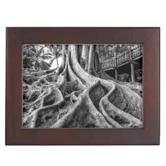 Massive rubber tree roots memory boxes