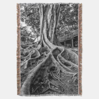 Massive rubber tree roots throw blanket