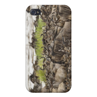 Massive Wildebeest herd during migration, iPhone 4/4S Cases