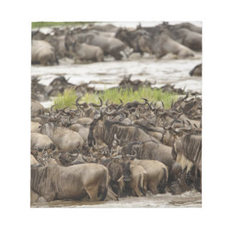 Massive Wildebeest herd during migration, Notepad
