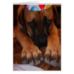 Mastiff Birthday - English Mastiff Dog Birthday Greeting Card