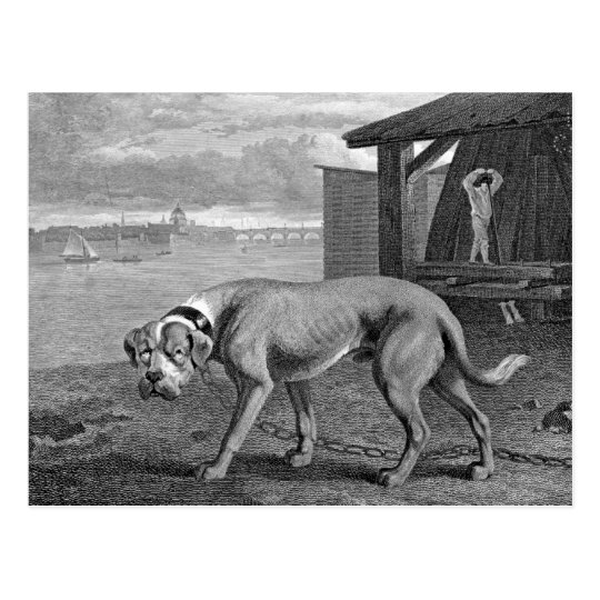 Mastiff Dog Vintage Illustration Postcard