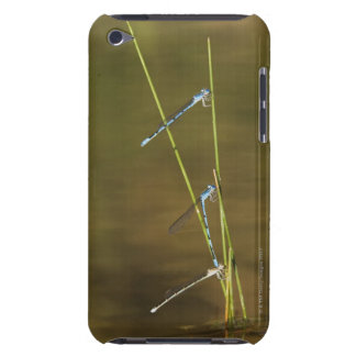 Mating Damselflies iPod Case-Mate Cases