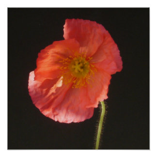 Matte Print - Close Up Flower
