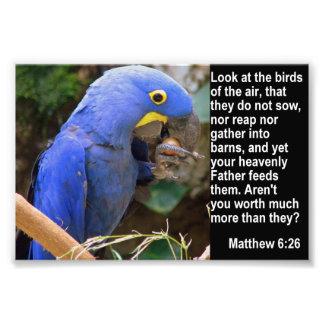Matthew 6:26 with Blue Macaw Photo Print