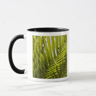 Mauritius, Central Mauritius, Moka, palm 2 Mug