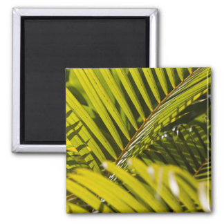 Mauritius, Central Mauritius, Moka, palm Magnet