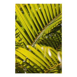 Mauritius, Central Mauritius, Moka, palm Photo Print