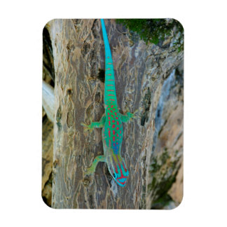 Mauritius Lowland Forest Day Gecko Magnet