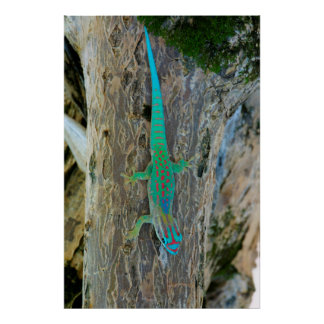 Mauritius Lowland Forest Day Gecko Poster