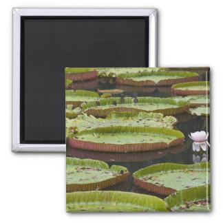Mauritius, Pamplemousses, SSR Botanical Magnet