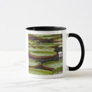 Mauritius, Pamplemousses, SSR Botanical Mug