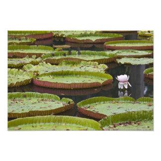 Mauritius, Pamplemousses, SSR Botanical Photo Print