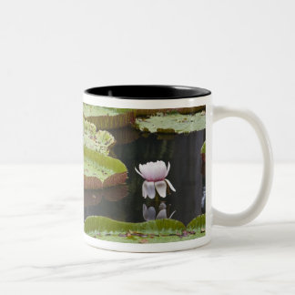 Mauritius, Pamplemousses, SSR Botanical Two-Tone Coffee Mug
