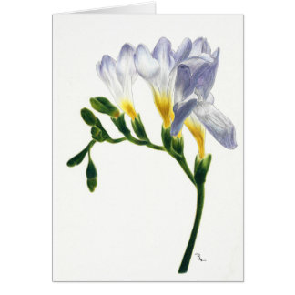 Mauve Freesias Card