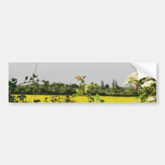 May Tree and Field at Beltane Bumper Sticker