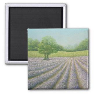 Mayfield Lavender in Bloom, Carshalton Magnet