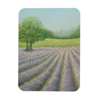 Mayfield Lavender in Bloom Carshalton Photo Magnet