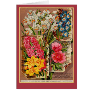 Mayflower Seed Packet Vintage Illustration Greeting Card