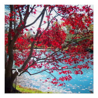 Maymont Gardens Red Maple Tree Virginia Poster Art