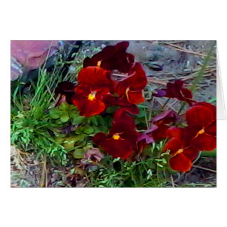 MClairArt's PhotosNArt Flower NoteCards Note Card