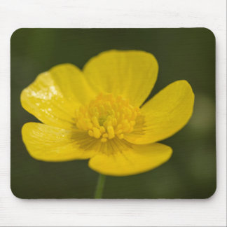 Meadow Buttercup Mouse Pad