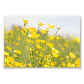 Meadow Buttercups Photo Print
